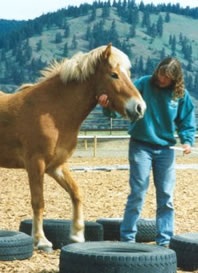 Events at the Icelandic Horse Farm